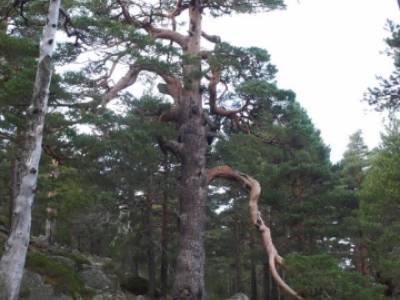 Ruta por el valle de Fuenfría, Siete Picos; club escalada madrid; senderismo peñalara